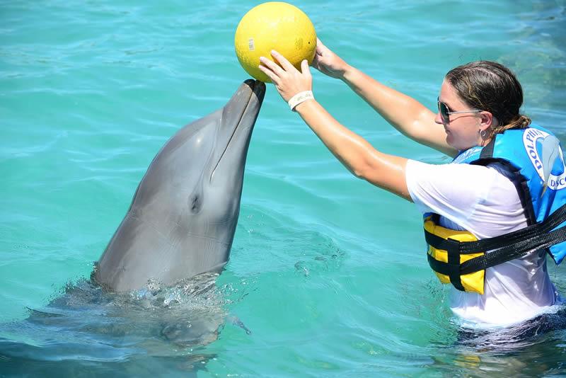 Tango Dolphin Discovery